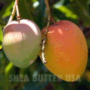 Shea Butter USA wholesale unrefined mango butter