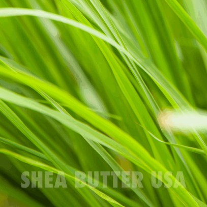 Wholesale organic lemon grass oil