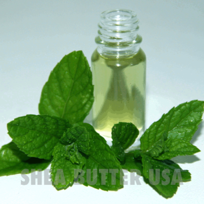 Wholesale peppermint mentha piperita
