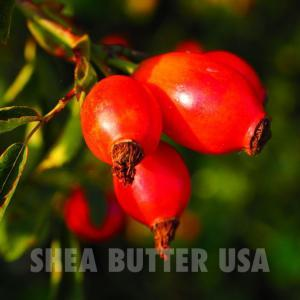 Wholesale Rosehip Seed Oil